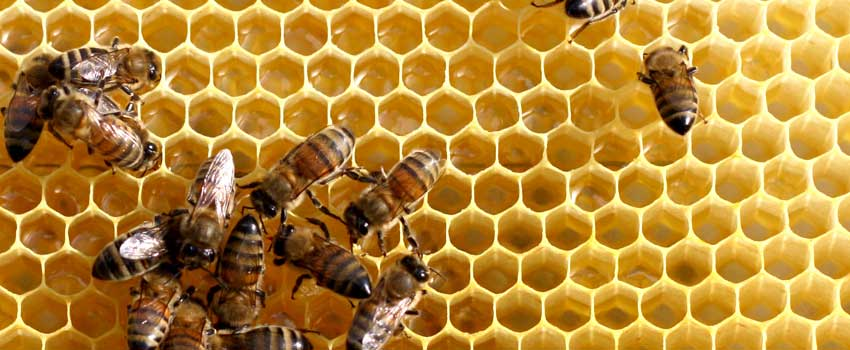 biernes verden
