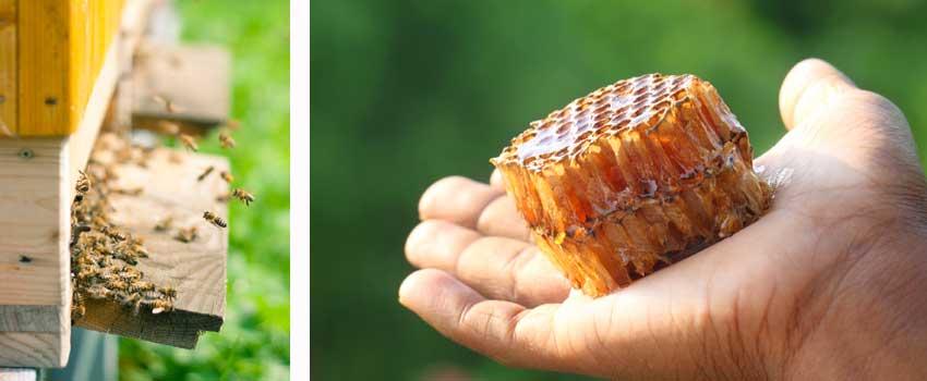 bier skaber værdi
