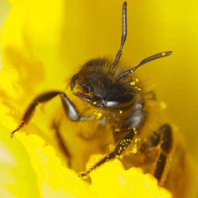 Elsker blomsterne jeg jeg bierne elsker KONKURRENCE: BIERNE