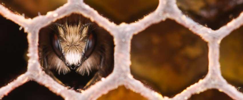 Fra blomst til honning
